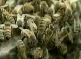 BeeProblem